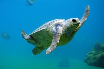 photo of a sea turtle